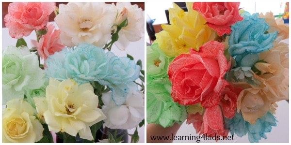 absorption activity rainbow roses learning 4 kids
