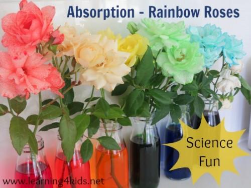 Absorption Activities