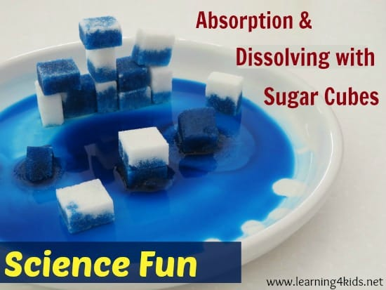 Absorption and Dissolving with Sugar Cubes - super simple science experiment for kids