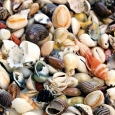 Small Seashells 350g