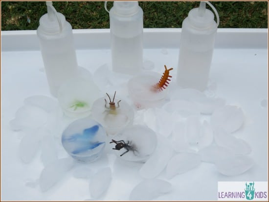 Insects in Ice Activity