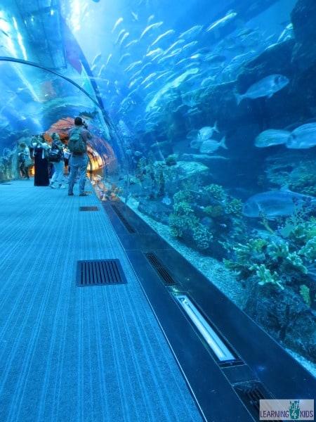 Aquarium Tunnel Dubai Underwater Zoo