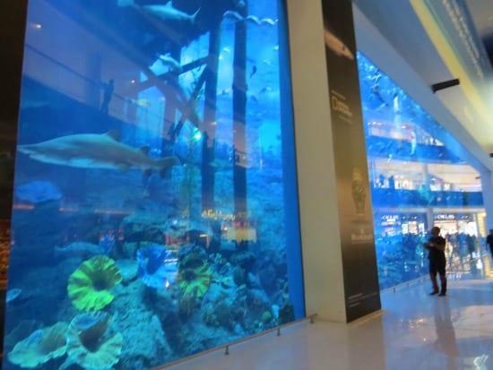 The Dubai Aquarium at the Dubai Mall
