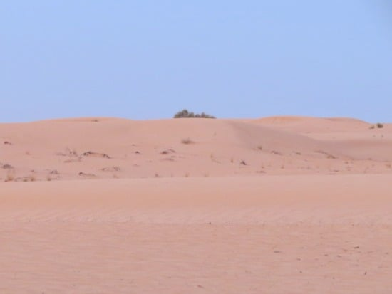 Things to do in Dubai - safari desert