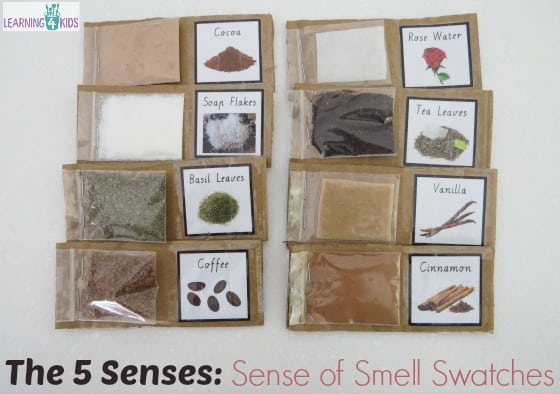 The 5 Senses Activity - Sense of Smell