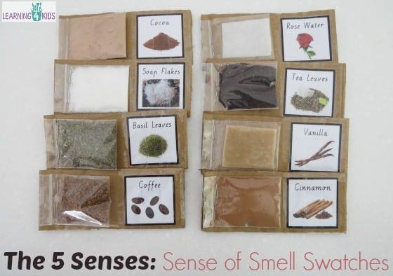 The 5 Senses Activity - Sense of Smell