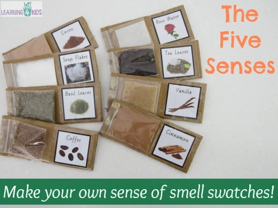 The Five Senses - Sense of Smell Activity