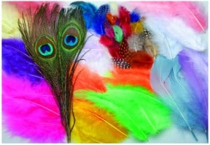 Value Pack of Assorted Feathers 25g