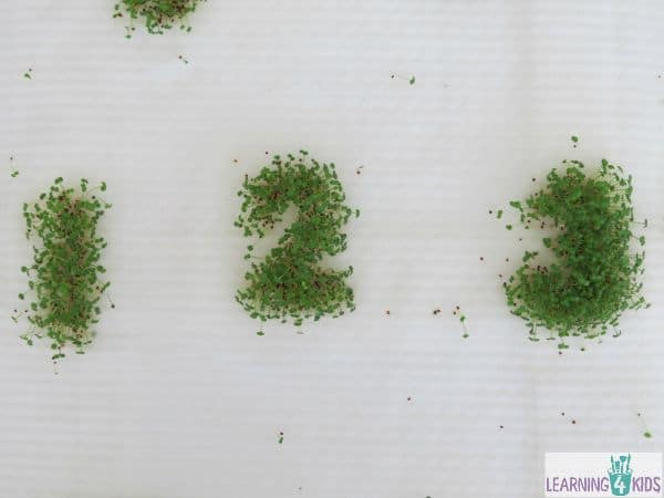 Growing Watercress Numbers with cookie cutters
