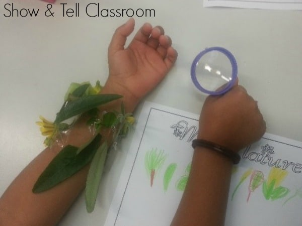 Nature Bands - Show & Tell Classroom. Image credit Justine Moorman